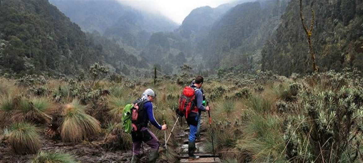 Mount Rwenzori Climbing Tour